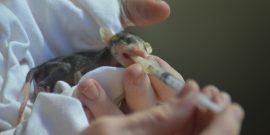 Feeding baby animals at wildlife rescue centre