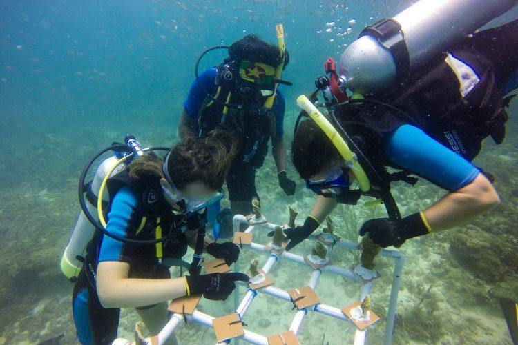 Volunteers working on coral reef table