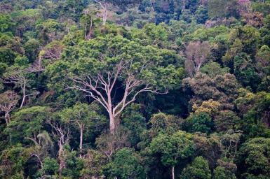 Amazon tree canopy