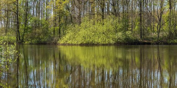 Beekdal Linde forest Netherlands