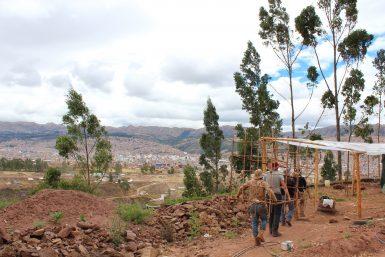 Building tree nursery