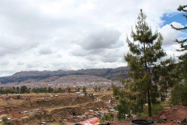 Cedar tree view Cusco