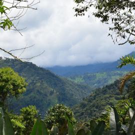 Ecuador cloud forest