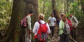 Forest ranger teaching volunteers