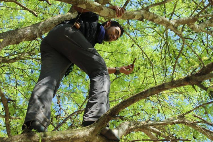 Intern climbing in tree