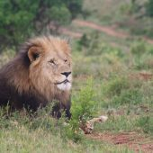 Kariega Big Five Game Reserve Volunteer Programme, South Africa
