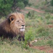 Kariega Big Five Game Reserve Volunteer Programme, South Africa