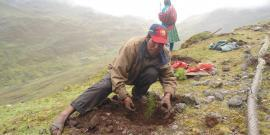 Local planting tree in Cusco