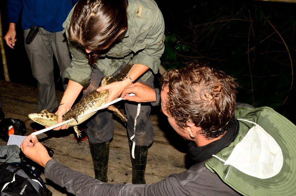 Amazon Herpetofauna Conservation Research Programme, Peru