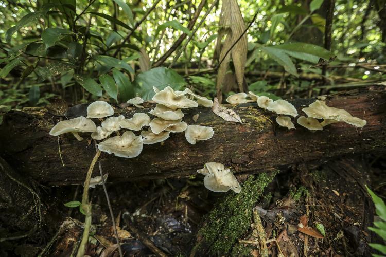 Medicinal Plants Mushroom
