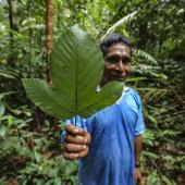 Amazon Medicinal Plant Research Volunteer & Internship Project, Peru