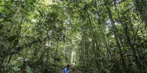 Indigenous medicinal plants cleansing leaves