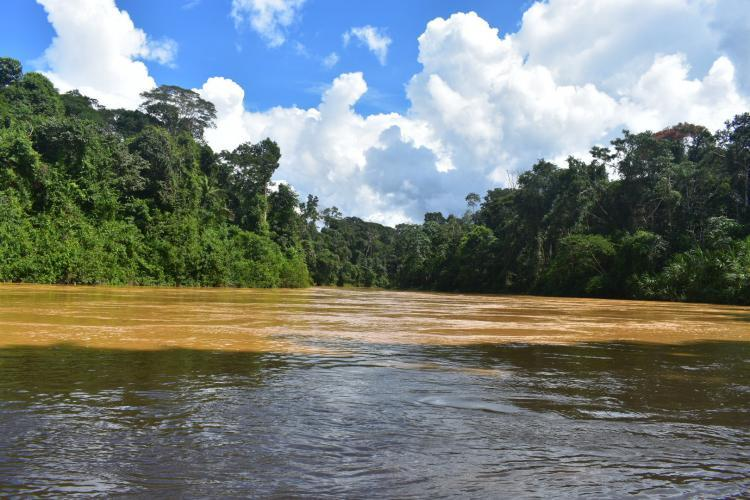 On river in amazon rainforest