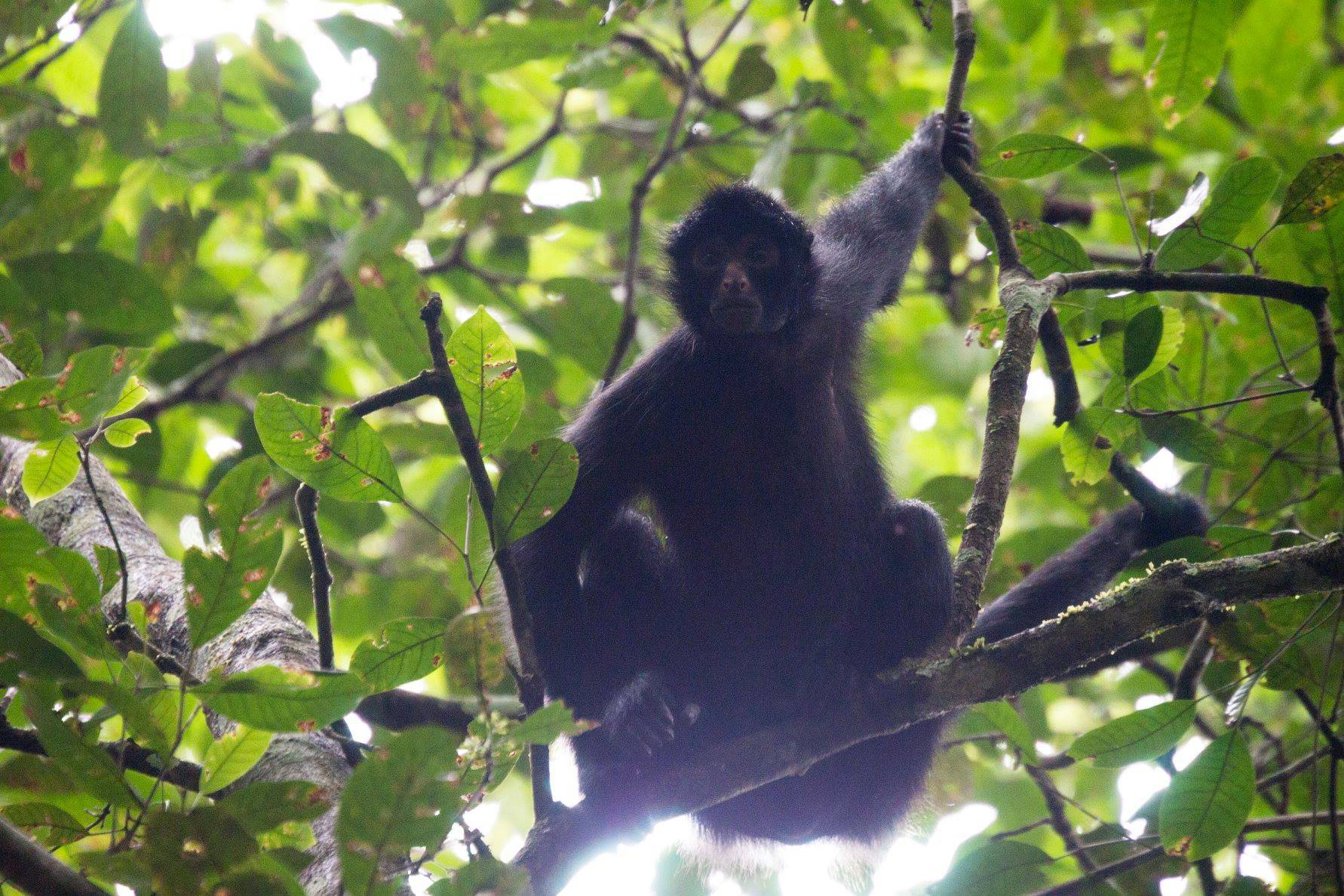 Amazon Primate Conservation Research Programme, Peru