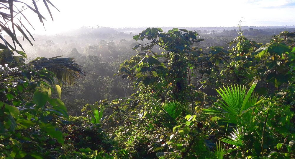 View from above amazon rainforest