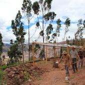 Reforestation Volunteer Project, Peru