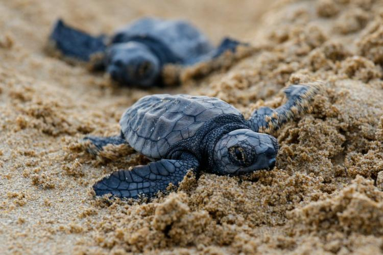 Baby sea turtles in Greece