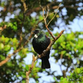 Bird in tree New Zealand forest