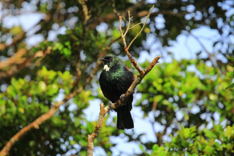 Bird in tree New Zealand forest