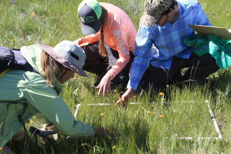 Volunteers researching plants in Oregon