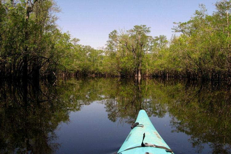 Kayaking on Cape Fear river