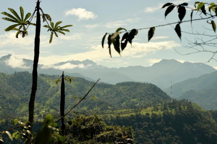 Ecuador cloud forest skyline