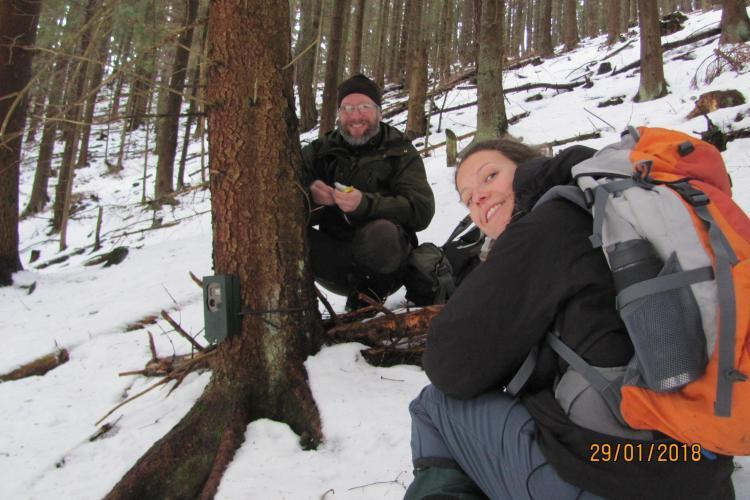Wolf conservation volunteers setting camera trap