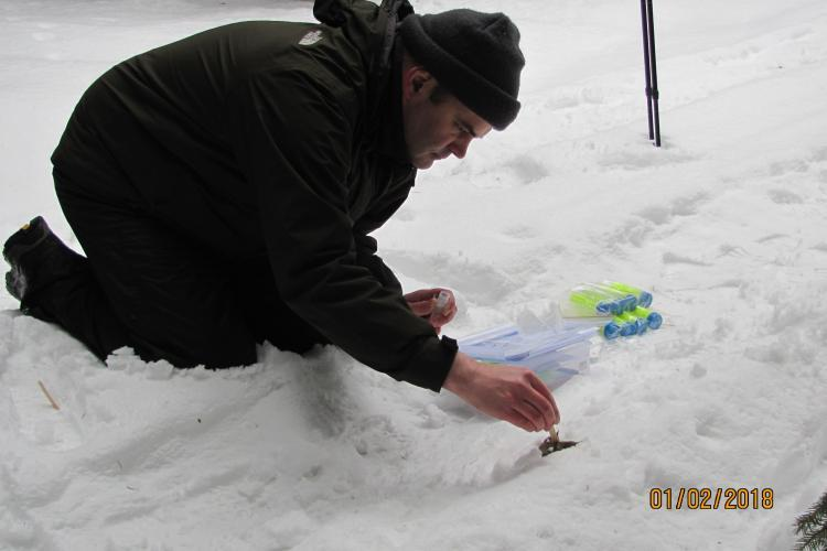 Wolf conservation volunteer taking sample from snow
