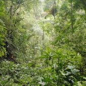 Cloud Forest Conservation Project, Ecuador