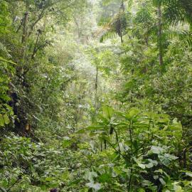 Dense cloud forest in Ecuador