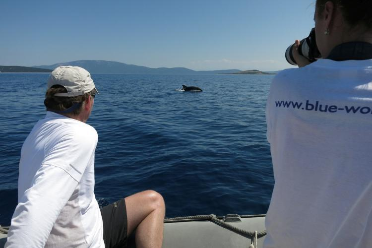 Volunteers watching dolphins in Croatia