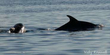 Volunteers researching dolphins in Croatia