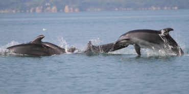 Dolphin group swimming in Greece