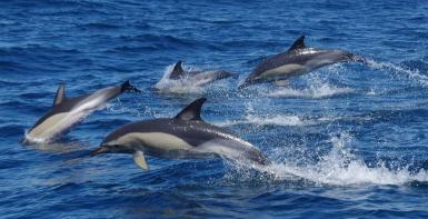 alttagDolphin Whale Research | Volunteer Portugal | Working Abroad