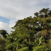 Cloud Forest Conservation & Sustainability Volunteer Project, Ecuador