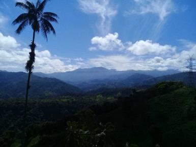 Cloud forest canopy in Ecuador