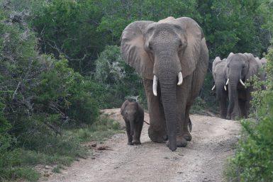 alttagKariega Game Reserve | Volunteer South Africa | Working Abroad