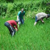 Environmental Volunteering on a Traditional Farming Project, Nepal
