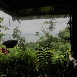 Foliage at volunteer lodging in Costa Rica