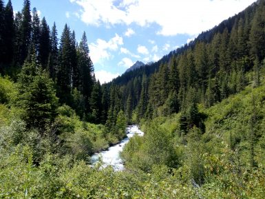 View of forest and river in Oregon
