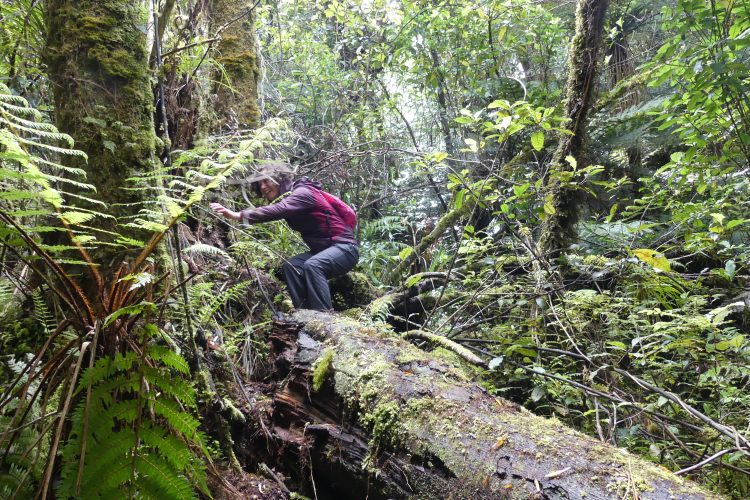 Conservation volunteer in New Zealand forest