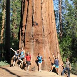 Volunteers in their free time discovering red woods in California