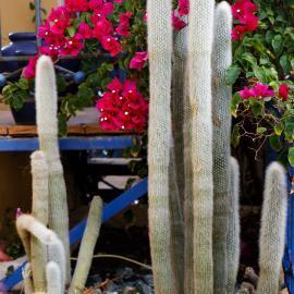 Garden plants in Lixouri