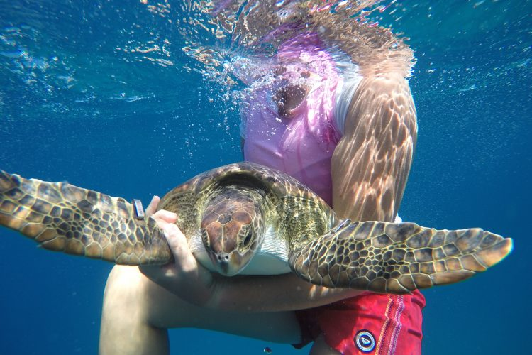 In water work with turtles in Grenada