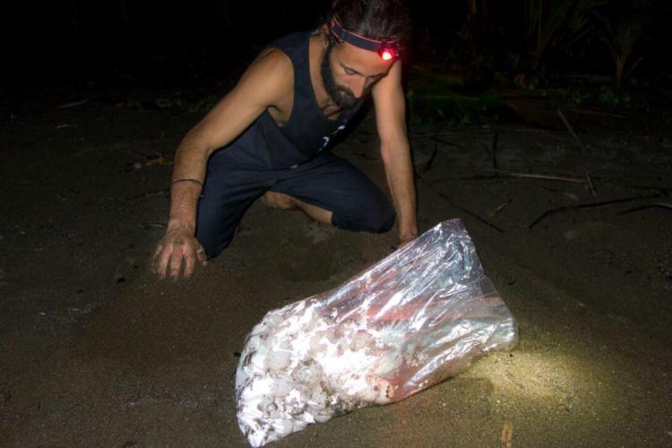Volunteer with turtle eggs