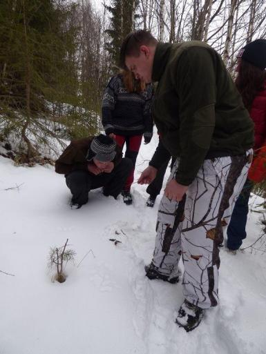 Volunteers tracking wolves in Slovakia