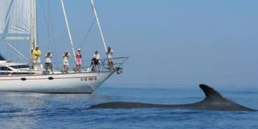 Fin whale next to boat in Italy