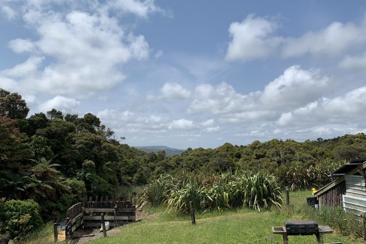 Kiwi sanctuary views
