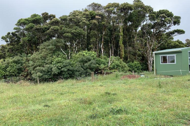 Edge of native forest at Kiwi sanctuary