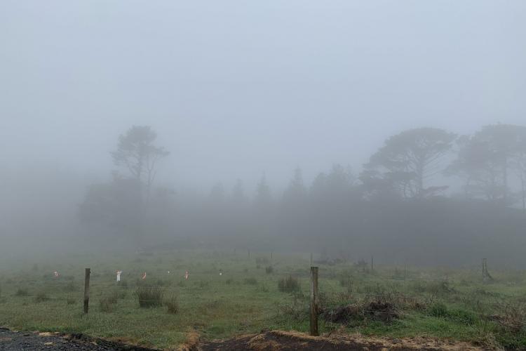 Kiwi sanctuary in fog